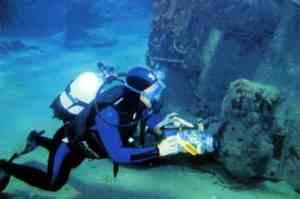 Во Владивостоке покажут подводный мир Японского моря
