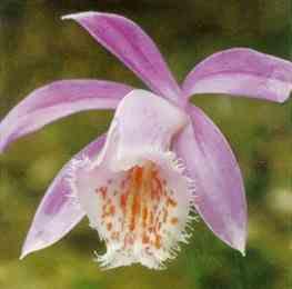 Ханой: благоухание цветов, отличное настроение